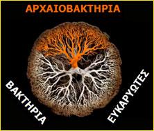 Η τεράστια οικογένεια, στην οποία ανήκουμε, έχει ένα απλό όνομα. Οι επιστήμονες ονόμασαν αυτόν τον πρόγονοLUCA. Είναι ακρωνύμιο από τα αγγλικά. (Last Universal Common Ancestor). Τελευταίος Παγκόσμιος Κοινός πρόγονος για όλα τα όντα. Απ΄αυτόν προκύπτουν οι τρεις κατηγορίες:αρχαιοβακτήρια,ευκαρυώτεςκαιβακτήρια.
